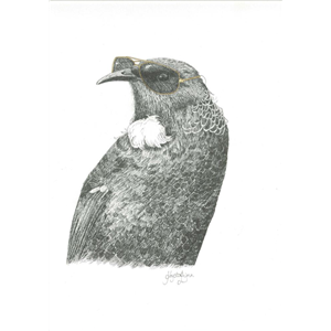 Art Print: Tui Tom