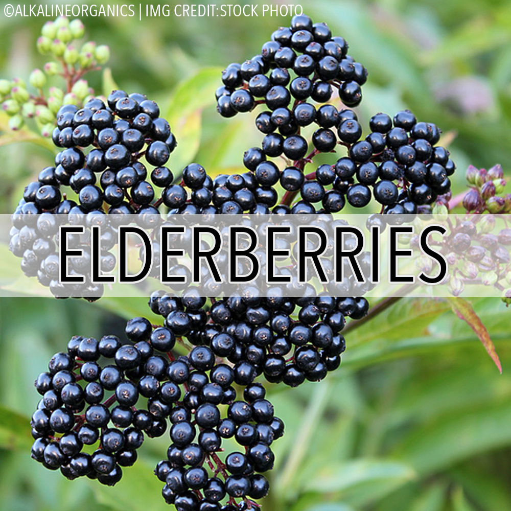 Organic Dried Elderberries