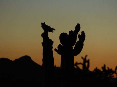 Tucson, Arizona Sunset with Cactus Silhouette, and owl sitting on cactus