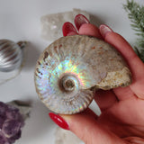 Ammonite, Opalized Ammonite (#12)