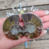 Sliced Ammonite Pair, Opalized Ammonite (#1)