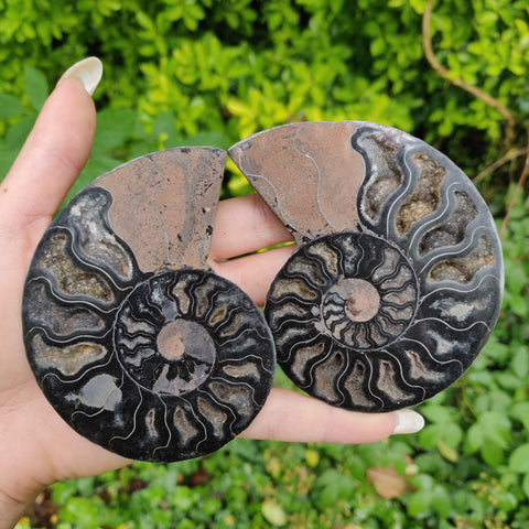 Black Ammonite Pair (#1)