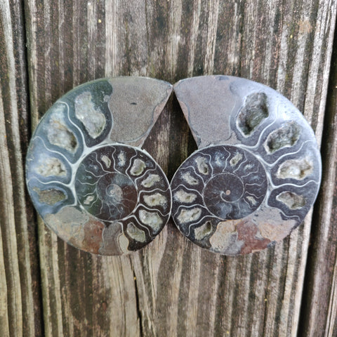 Black Ammonite Pair (#2)