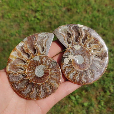 Ammonite Pair (#3)
