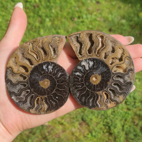 Black Ammonite Pair (#3)