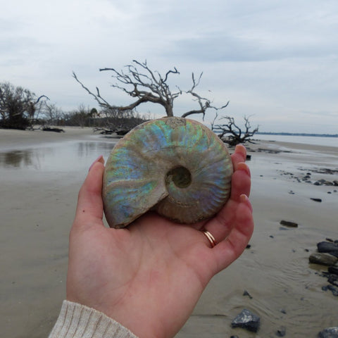 Ammonite, Opalized Ammonite (#9)