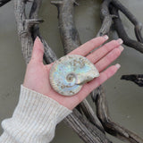 Ammonite, Opalized Ammonite (#7)