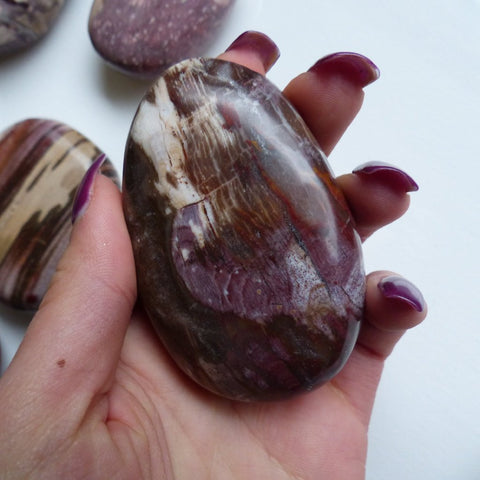 Petrified Wood Palm Stone (#3)