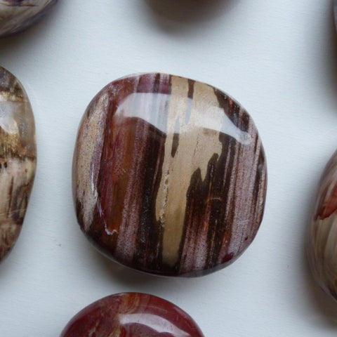 Petrified Wood Palm Stone (#5)
