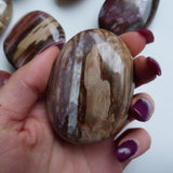 Petrified Wood Palm Stone (#6)