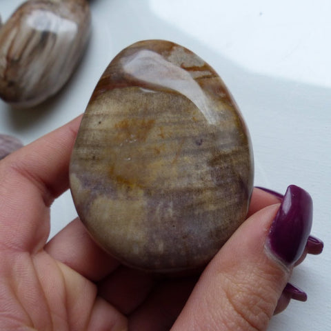 Petrified Wood Palm Stone (#7)