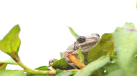 Creating a frog friendly garden. We Know Water Gardens