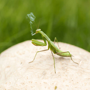 How to Make The Perfect Grasshopper