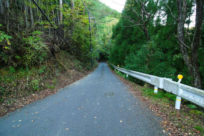 Steep descents into the lush forest on the cycling route.