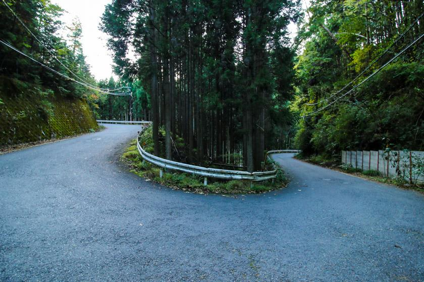 Dreamy turns and bends in the deep forest along the 107 route.