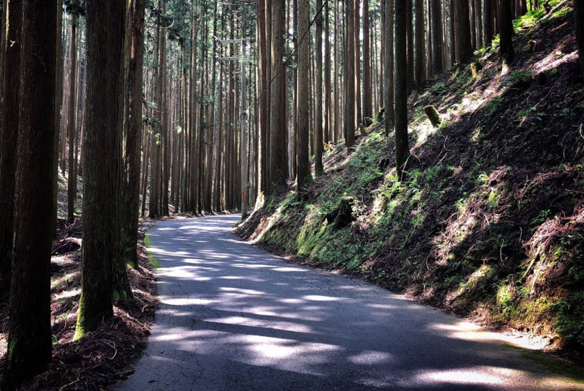 Beautiful cycling in the forest north of Kyoto city.