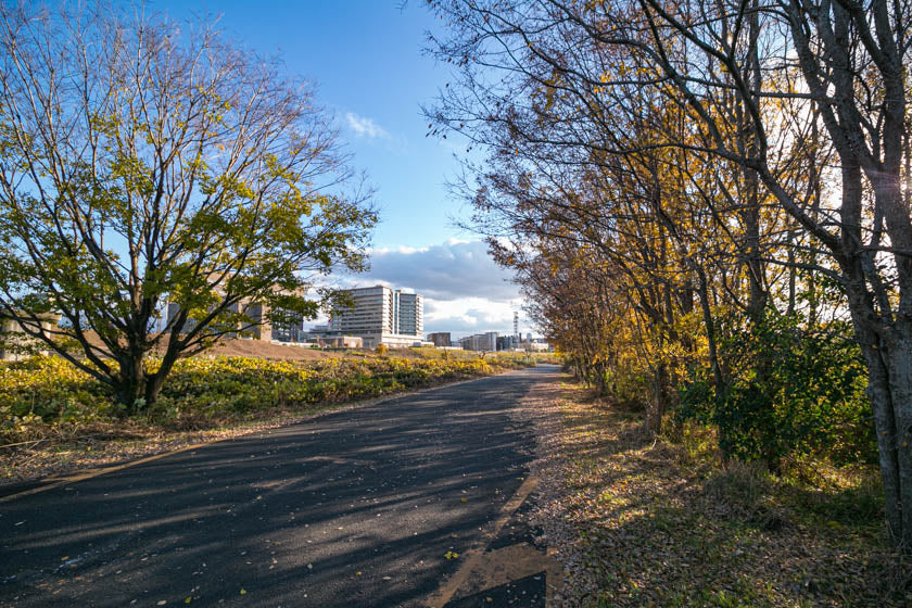The trees and cycling road as we get closer to Osaka city on the ride.