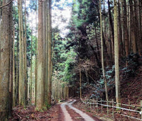 A rural cycling route winding through the forest in Kyoto, Japan.