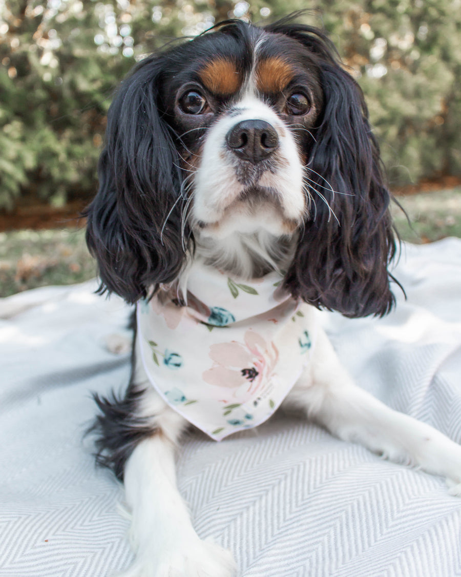 Bloom Dog Bandana by Arnold & Henry