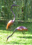 Goliath Heron Pair