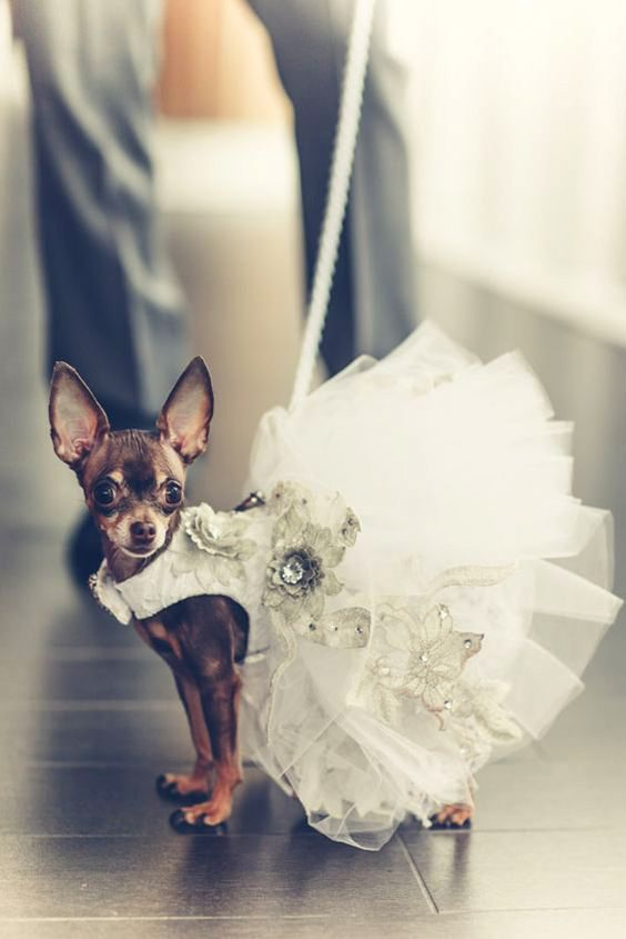 Wedding Pet