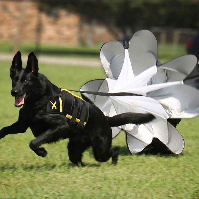 Dog Parachute Attachment