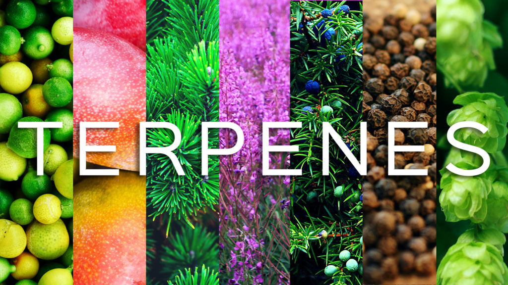 What are Cannabis Terpenes