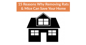 15 Reasons Why Removing Rats & Mice Can Save Your Home
