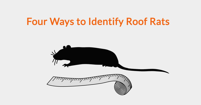 Four Ways to Identify Roof Rats