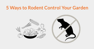 5 Ways to Rodent Control Your Garden