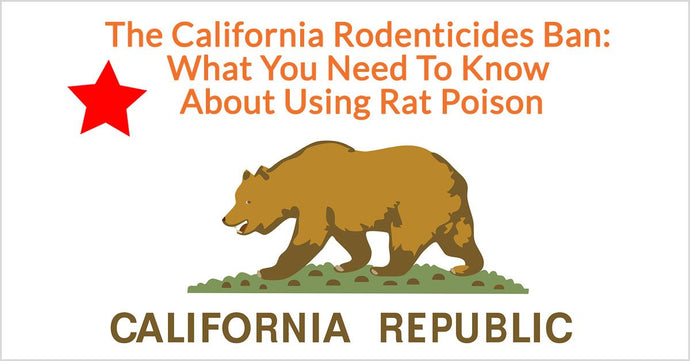 The California Rodenticides Ban: What You Need To Know About Using Rat Poison