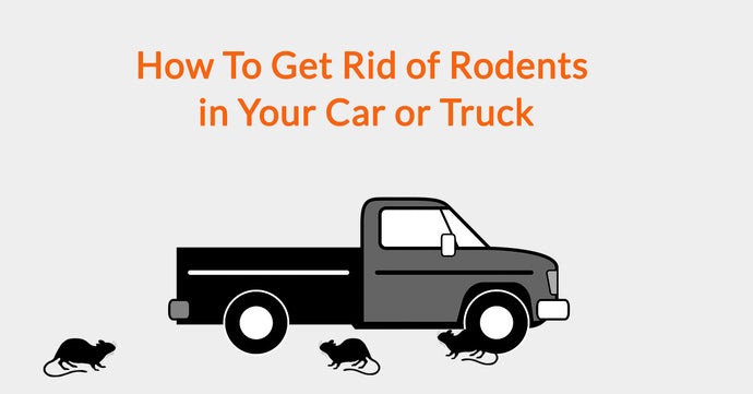 How To Get Rid of Rodents in Your Car or Truck