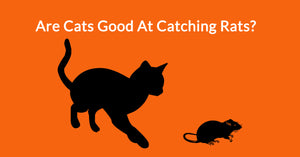 Are Cats Good At Catching Rats?