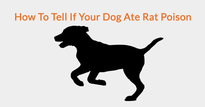 How To Tell If Your Dog Ate Rat Poison