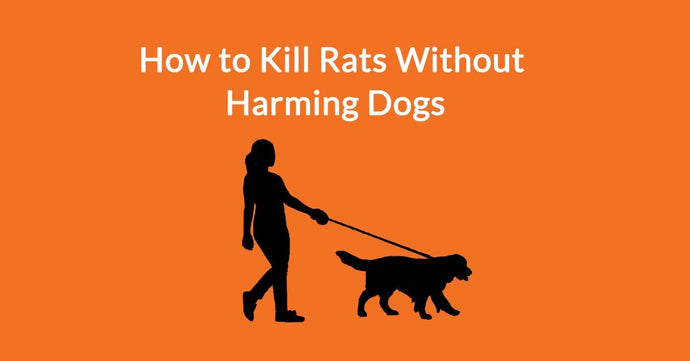How to Kill Rats Without Harming Dogs