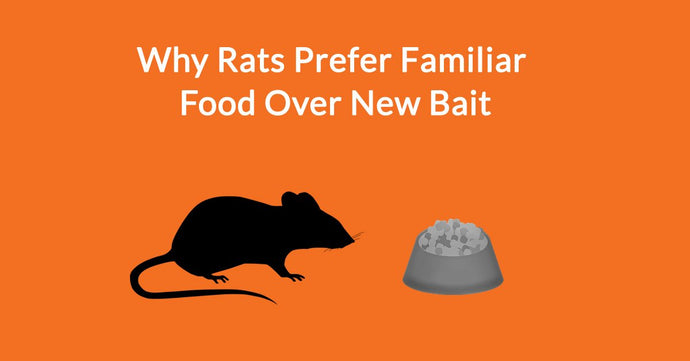 Why Rats Prefer Familiar Food Over New Bait