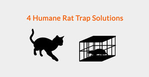 4 Humane Rat Trap Solutions