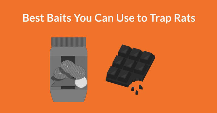 Best Baits You Can Use to Trap Rats