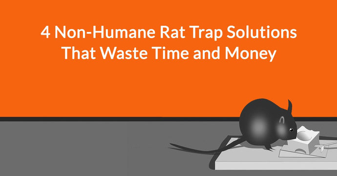 4 Non-Humane Rat Trap Solutions That Waste Time and Money