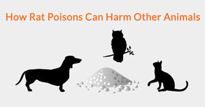 How Rat Poisons Can Harm Other Animals