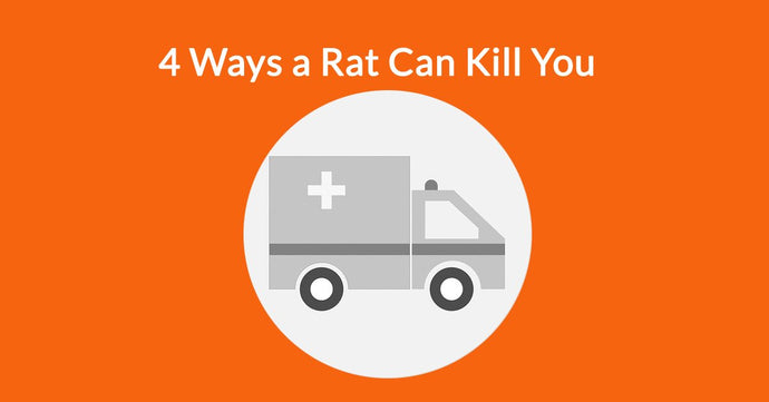 4 Ways a Rat Can Kill You
