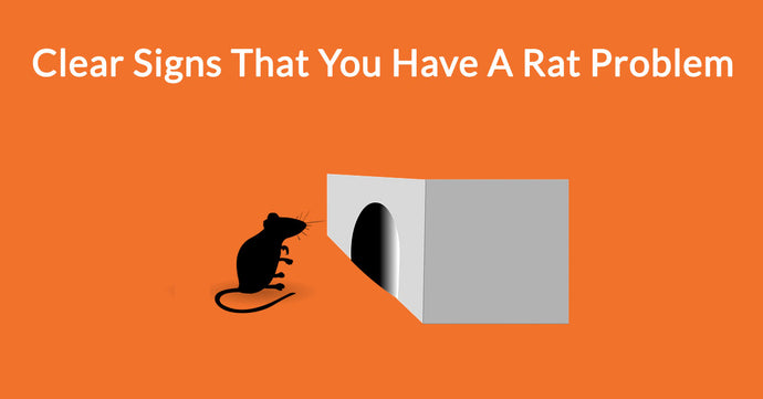 Clear Signs That You Have A Rat Problem