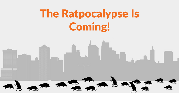 The Ratpocalypse is Coming - Why Rat Populations Are Booming During The COVID-19 Pandemic