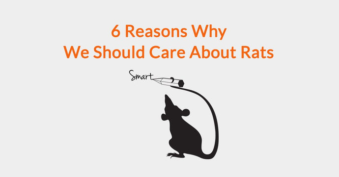 6 Reasons Why We Should Care About Rats