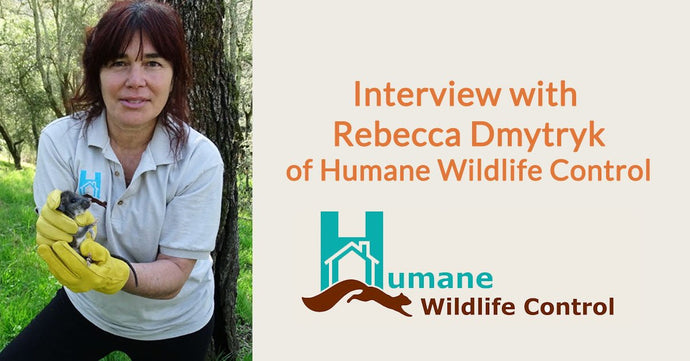 Interview With Rebecca Dmytryk of Humane Wildlife Control