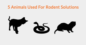 5 Animals Used For Rodent Solutions