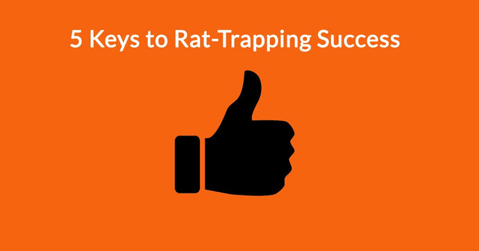 5 Keys to Rat-Trapping Success