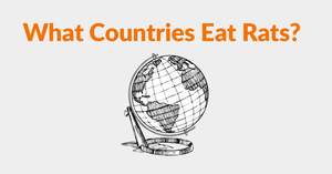 What Countries Eat Rats? A Guide To Eating Rats