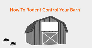How To Rodent Control Your Barn