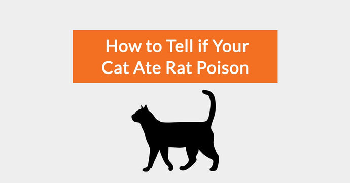 How To Tell If Your Cat Ate Rat Poison